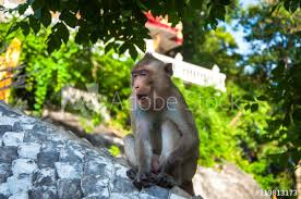 Baby Monkey Sitting And Yawning On Handrail In Temple Poster