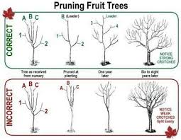 Pin by Lauri Cameron on Gardening | Pruning fruit trees, Fruit tree garden,  Fruit garden