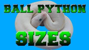 Ball Python Size Chart Ball Python Sizes Baby To Adult