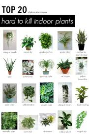 Full Size of Lighting:tropical House Plants Beautiful Indoor Light For  Plants 7 Super Low ...