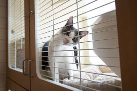 boarding cats while on vacation. Beautiful Boarding St Louis Cat Boarding Services With Cats While On Vacation E