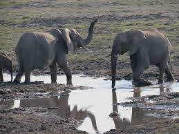 an african elephant photo essay the world wanderer an african elephant photo essay