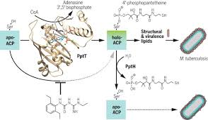 Sci Ppt Opposing Reactions In Coenzyme A Metabolism Sensitize