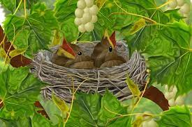 Baby Birds in Nest in Grapevines - Art by Lorene   Bird art, Baby bird,  Birds