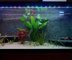 fish tank lighting ideas. Fish Tank Lighting Ideas Aquarium Rgb Lights With Sunsets And Sunrises O