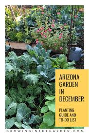december garden inspiration a december garden checklist and a list of which flowers herbs and vegetables to plant in your arizona garden in december
