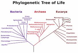 Chordata Taxonomy Chart Uwl Website