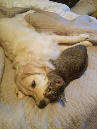 dog and cat love each other. Contemporary Other My Cat And Dog Love Each Other For Dog And Cat Love Each Other O
