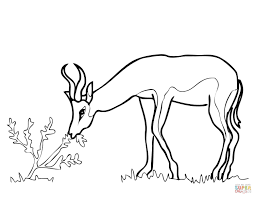 Small Picture Springbok from South Africa coloring page Free Printable