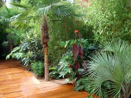 Small Picture Tropical Plants in a London garden Urban Tropics exotic garden