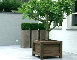 large planters for trees box planter boxes fig tree and boxwood in on a patio somewhere large planters for trees