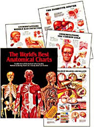 World S Best Anatomical Charts Aa Acc 35 Worlds Best Anatomical Charts