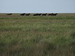 Image result for steppe