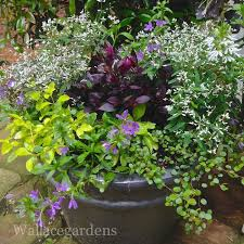 Small Picture Sensational Container Garden Designs
