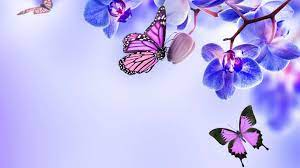 Butterfly PC Wallpapers - Wallpaper Cave