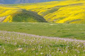 san luis obispo canyons covered with spring wildflowers in full bloom