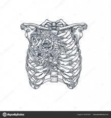 Tetování Anatomie Vintage Ilustrace Růže Hrudníku Kostra Vektorové