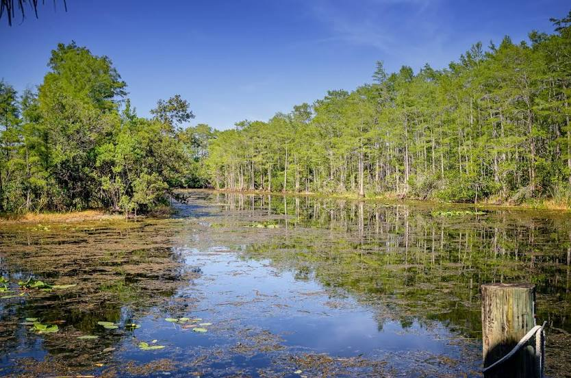Tree Services in Lake Park, FL