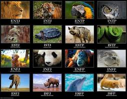 Myers Briggs Personality Types As Animals Mbti Im A Dog