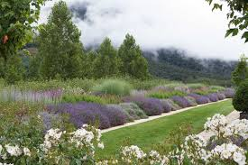 clouds cover mountains behind a country garden filled with purple flowering bushes