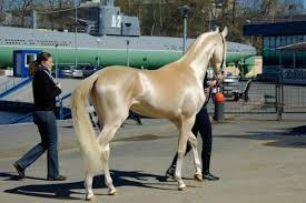 most beautiful horse breed in the world. Unique Horse Breeds With Most Beautiful Breed In The World