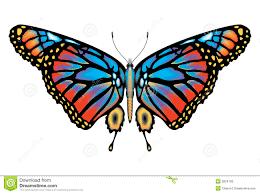 real beautiful colorful butterflies. Brilliant Real Colorful Monarch Butterfly Isolated In Real Beautiful Butterflies Y