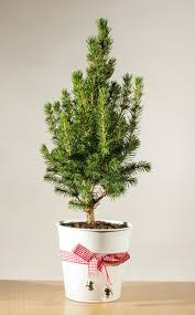 13 Christmas Tree Care Tips  for Faux & Live Trees! | thegoodstuff