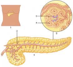 functie van alvleesklier