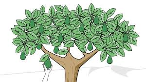 Avocado Tree Size Chart How To Plant An Avocado Tree With Pictures Wikihow