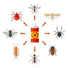 ment identifier un insecte de maison