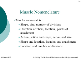 Kinesiology For Manual Therapies Ppt Video Online Download