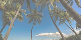 Palm Trees Tumblr Header Desktop Backgrounds for Free HD Wallpaper