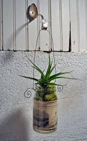 Best 25+ Hanging air plants ideas on Pinterest | Air plants, Hanging  terrarium and Terrarium plants for sale