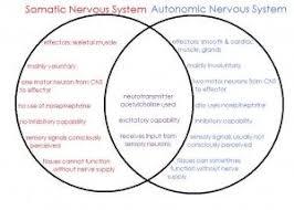 Central Nervous System Vs Peripheral Nervous System Venn Diagram Nervous System Venn Diagram Nursing