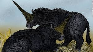 real mythical creatures found alive. Beautiful Creatures The Real U002639Siberian Unicornu002639 Or Elasmotherium  Inside Real Mythical Creatures Found Alive M