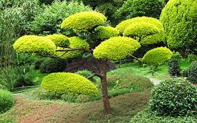 design ideas for a japanese garden