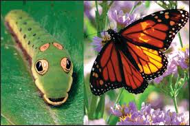 Image result for caterpillars and butterflies
