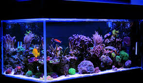 Saltwater Aquariums For Dummies Cheat Sheet Dummies