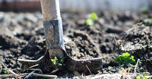 start a sustainable at home garden