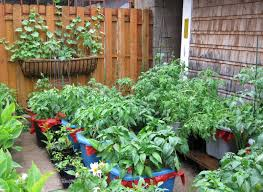 Kitchen Garden In Pots Vegetable Container Gardening With Everyday Objects Tasteful
