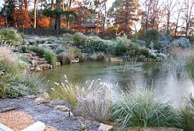 a natural pond in your garden
