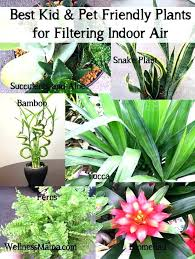 house plants safe for cats indoor best how to filter air low light cat long