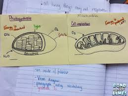 additionally teachers should use non plant examples as frequently as possible when speaking of photosynthesis and respiration i e bacteria single celled