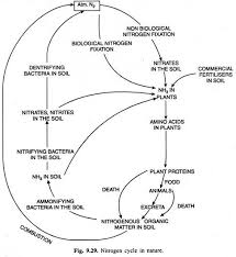 Nitrogen Cycle With Diagram