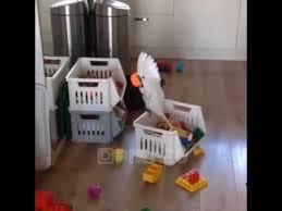 Попугай хулиганит       - YouTube