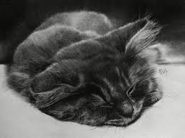 realistic cat drawing in pencil. Delighful Pencil A Sleeping Cat Drawn Using A Single Graphite Pencil Throughout Realistic Cat Drawing In Pencil
