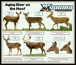 Whitetail Jawbone Aging Chart Aging Deer On The Hoof Whitetail Deer Hunting Hunting
