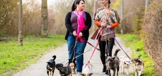How Much Should I Get Paid How Much Should You Get Paid To Walk A Dog My Business Plans