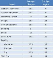 Dog Lifespan Chart By Breed When Is My Dog Eligible For A Doggie Aarp Card The