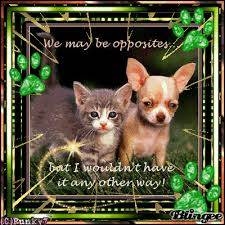 cute kittens and puppies quotes. Modren Kittens Chihuahua Puppy And Kitten Throughout Cute Kittens And Puppies Quotes